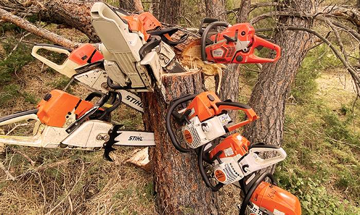 chainsaw tree landscaping